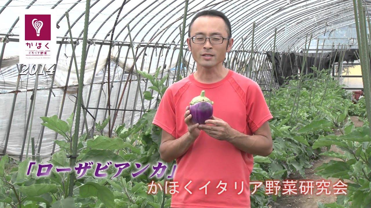 かほくイタリア野菜研究会 No.2