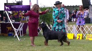 Rottweilers | Breed Judging 2021