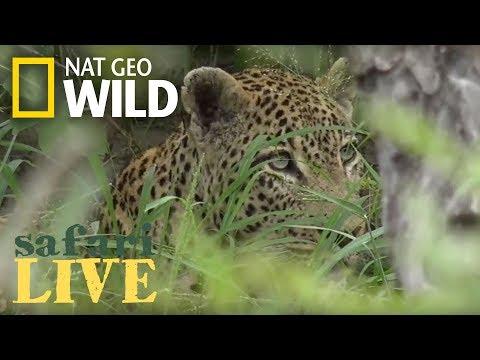Safari Live - Day 102 | Nat Geo Wild