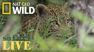 Safari Live - Day 102 Nat Geo Wild