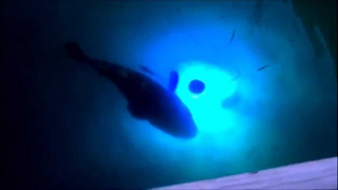 incredible underwater fishing lights lures goliath grouper - youtube, Reel Combo
