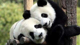 День влюбленных в мире животных !!!