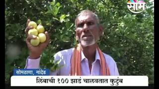 लिंबू शेतीतून मिळवला १ लाख ८० हजारांचा नफा | Panduranga Hamands Lemon farming success story