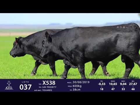 LOTE 37 - TAT X538 X584