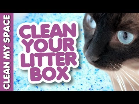 How to Keep the Litter Box Fresh & Clean! Easy Ideas for Cleaning Up After Your Cat (Clean My Space)