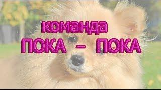 Команда Пока- пока Учим собаку  командам