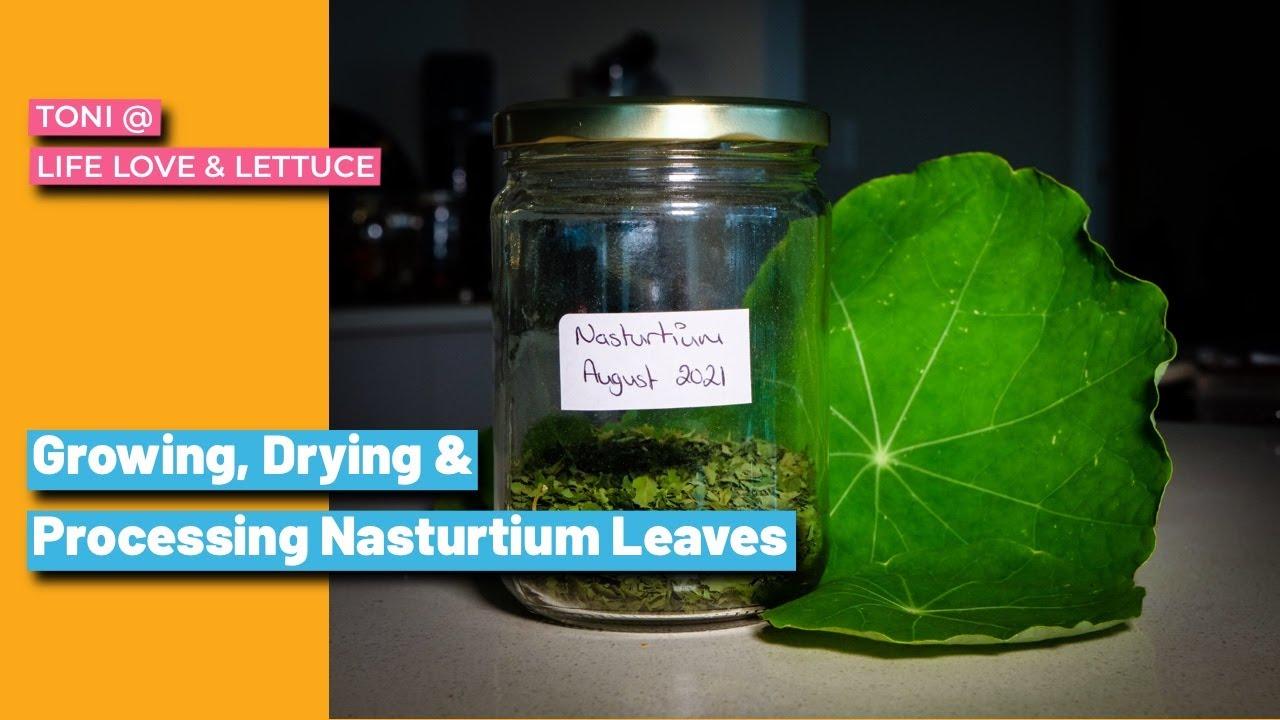 Growing, Drying & Processing Nasturtium from my Home Herb Garden