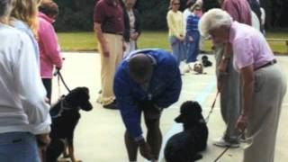 Northern Professional Dog Training