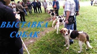 Выставка собак г. Брянск
