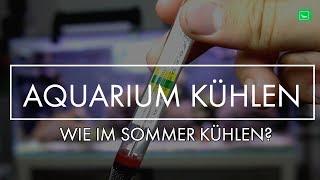 AQUARIUM KÜHLEN - SO GEHTS! | GarnelenTv