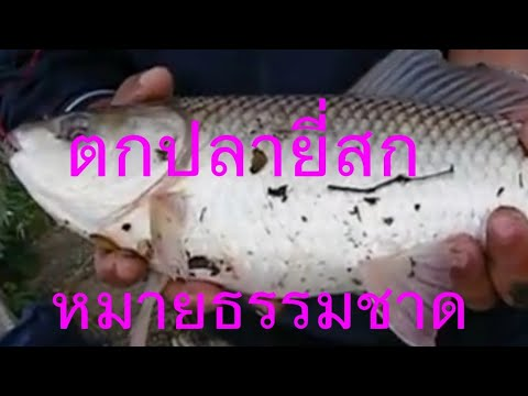 ตกปลา ยี่สกวัยคะนอง