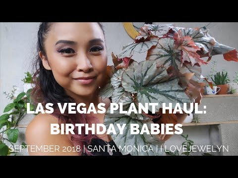 Las Vegas BIRTHDAY Plant haul | September 2018 | ILOVEJEWELYN