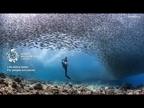 world-wildlife-day-2019---life-below-water:-for-people-and-planet