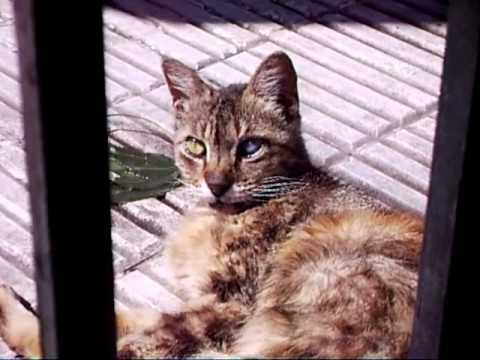 Inspirational Cat Documentary: Los Gatos de Buenos Aires