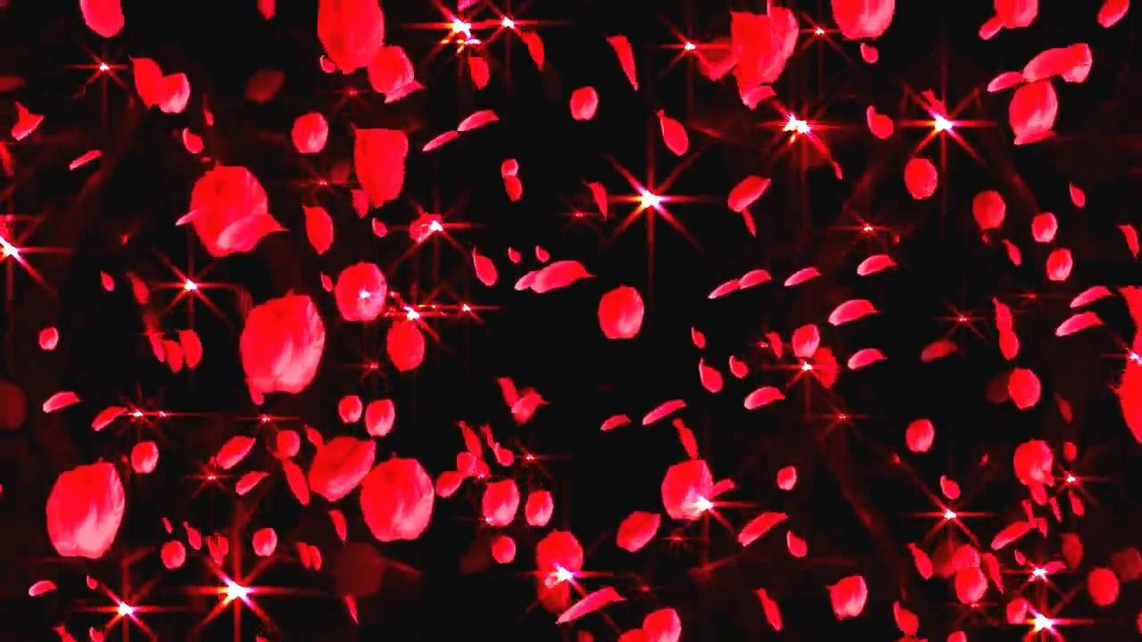 rose petals falling slow