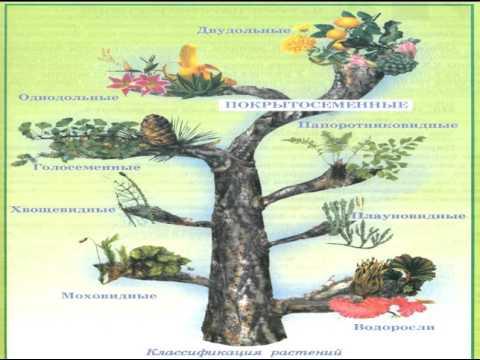 Многообразие форм живых организмов