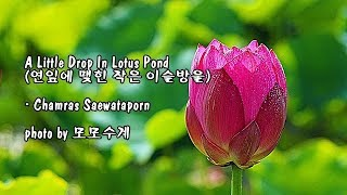Little Drop In Lotus Pond (연잎에 맺힌 작은 이슬방울)/ Chamras Saewataporn & photo by 모모수계