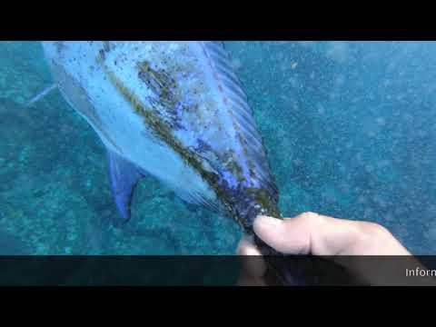 Ulua Fishing Big Island Shore Casting