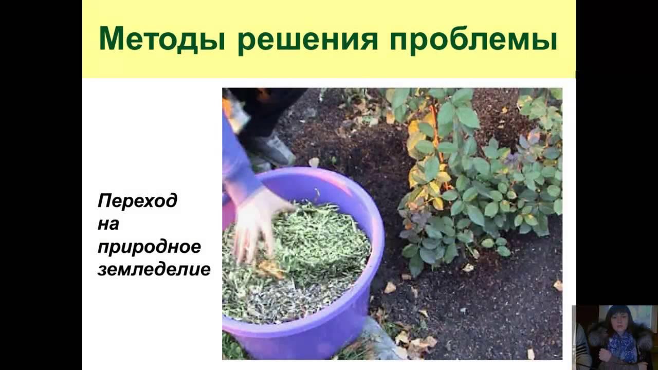 Защита растений от вредителей и болезней