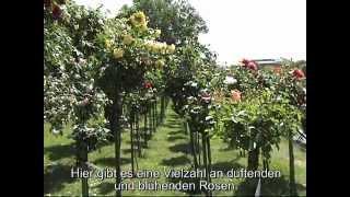 Немецкий язык с Соней, Урок 17