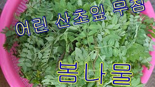 어린 산초잎채취 산초잎 고추장무침 산초잎 짱아치