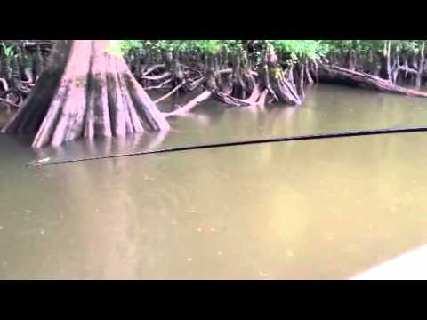 Jigger fishing - YouTube