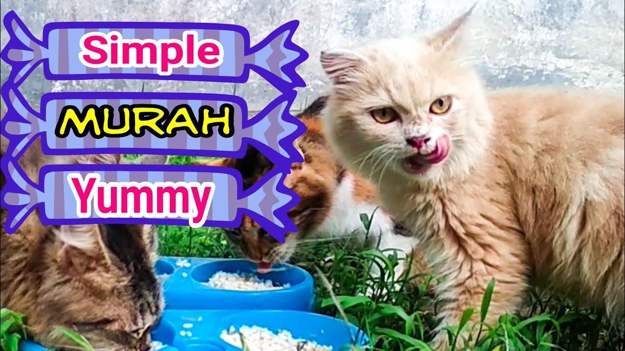 Cara Membuat Makanan Kucing Murah Dan Mudah Youtube