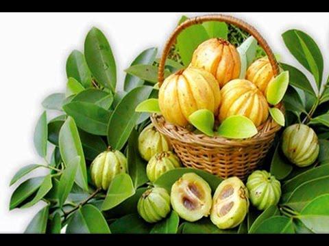 Nutrigold Garcinia Cambogia Powder Garciniacambogiaguide