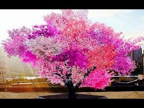Il a créé l'arbre aux 40 fruits ! Belle collaboration avec notre Créateur ! Hqdefault