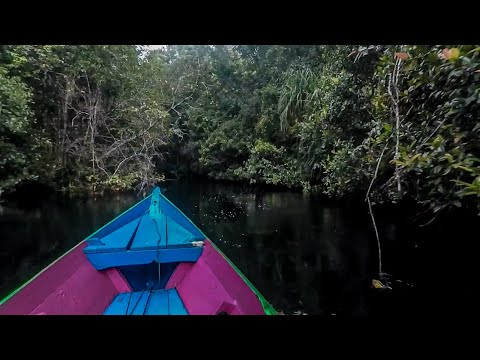 Penghuni Sungai Hitam Kalimantan