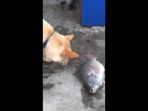 Con Chó có lòng từ bi khiến nhiều người suy nghĩ.