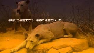 ツァボの人食いライオンは、1898年3月から同年12月にかけてイギリス領東...
