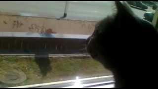 Кошка ненавидит мух