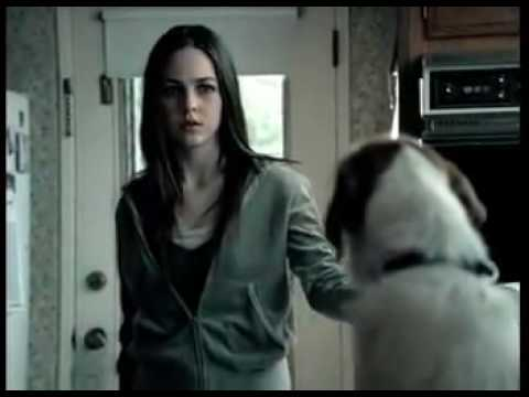 above the influence dog commercial