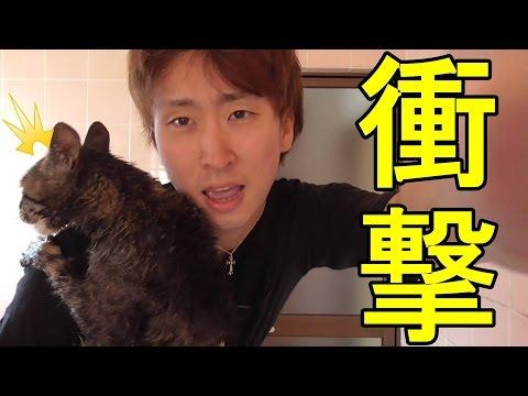 【猫動画】生まれて初めてシャンプーをした時の猫の反応がこれ。