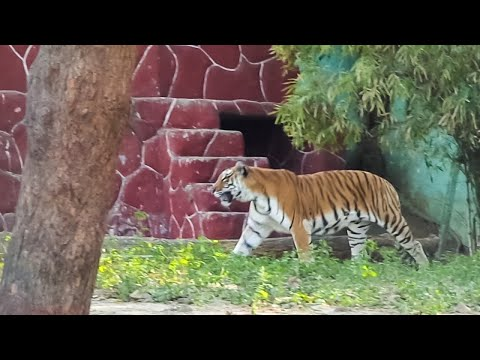 Ahmedabad, Gujarat 2k17 || Kankaria