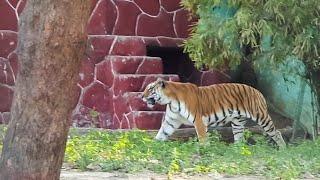 Ahmedabad, Gujarat 2k17    Kankaria