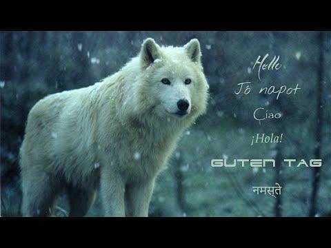 Word Wolf Begins