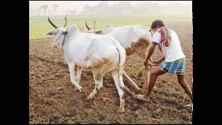 Video about indian farmer life download MP3, 3GP, MP4, WEBM, AVI, FLV Agustus 2018