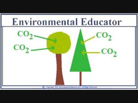 Trees Take In CO2 Emit Oxygen - Trees 2/7
