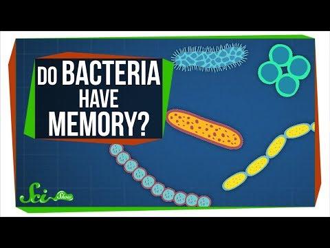 Do Bacterial Cells Store Memories?