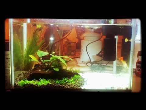 Simple beginner aquascape