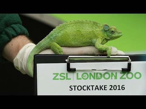 Animals out for the count at ZSL London Zoo