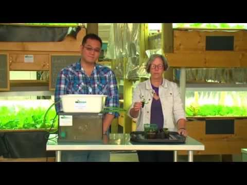 Aquaponics – How to Build Your Own