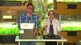 Aquaponics - كيفية بناء الخاصة بك