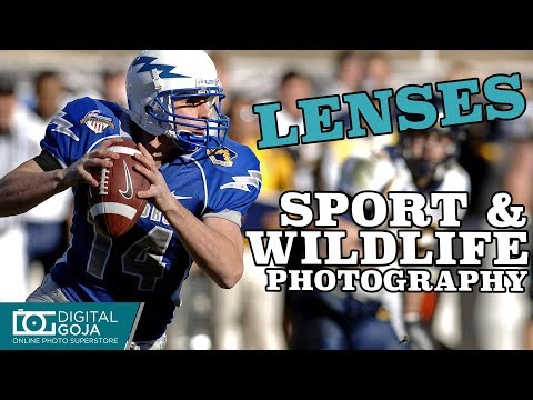 Best CANON Lens for Sports, Wildlife and Nature Photography