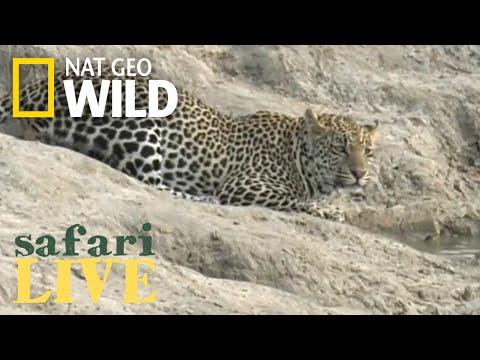 Nat Geo Wild Live Stream
