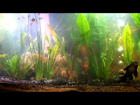 Piranha Fish Tank Youtube