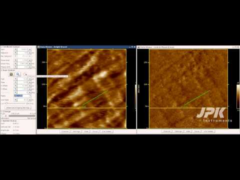Atomic Force Microscopy - Fast scanning of collagen type I