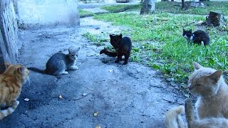 Cats want mating with young cat